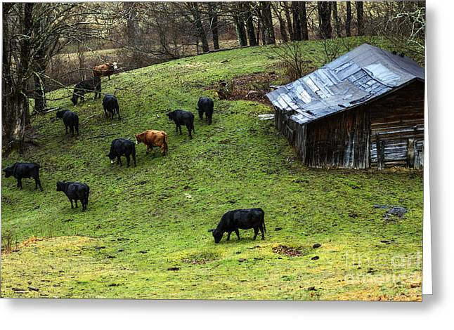 Pasture Field And Cattle Greeting Card by Thomas R Fletcher