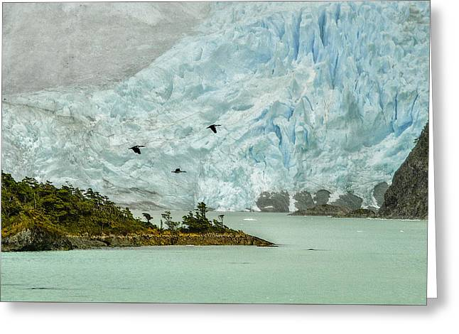 Greeting Card featuring the photograph Patagonia Glacier by Alan Toepfer
