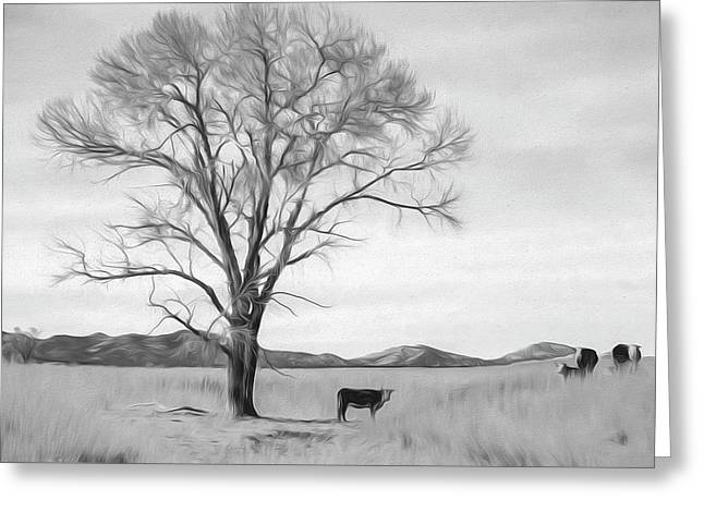 Patagonia Pasture Bw Greeting Card