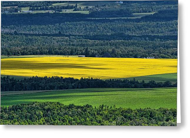 Greeting Card featuring the photograph Patch Of Yellow by Gary Smith