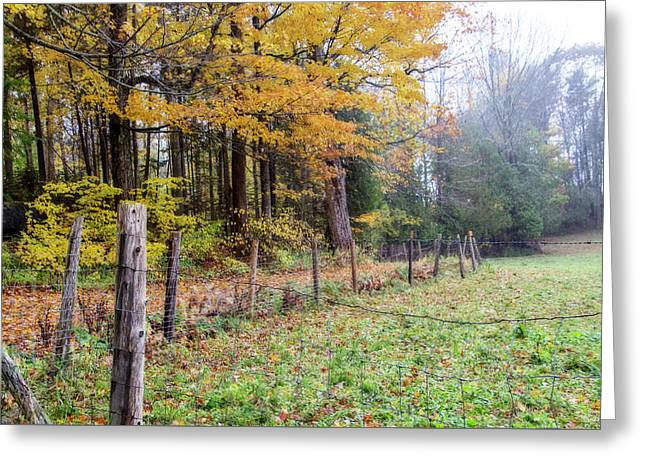 Path Into Forest Greeting Card by Terry Davis