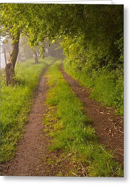 Path From Bullock Lake Greeting Card