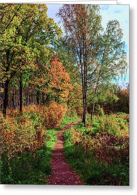 path in a beautiful country Park on a Sunny autumn day Greeting Card