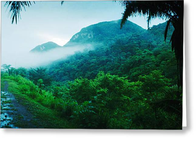 Path In A Rainforest, Cayo District Greeting Card by Panoramic Images