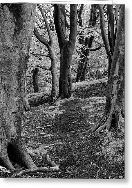 Path In Crownest Woods Greeting Card by Philip Openshaw