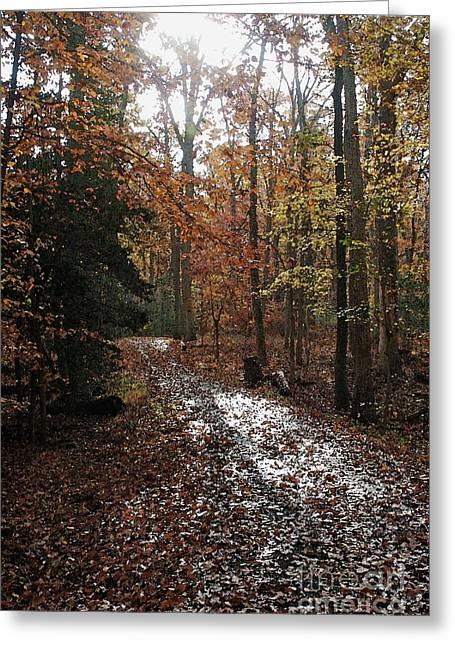Path In The Autumn Color Greeting Card by Hideaki Sakurai