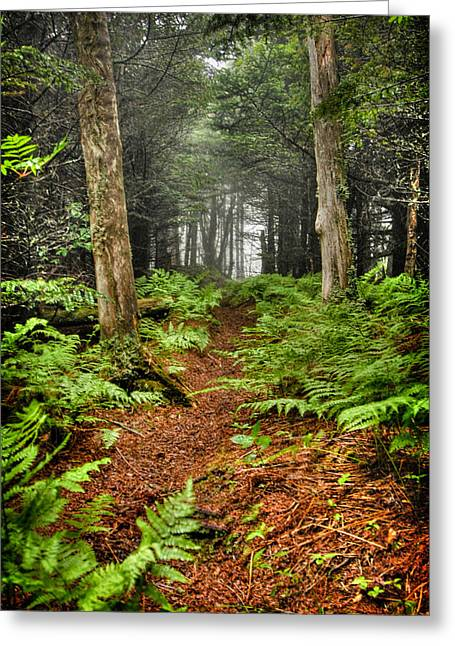 Path In The Ferns Greeting Card