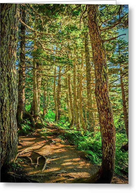 Path In The Trees Greeting Card