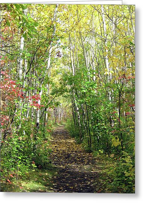 Path In The Woods 3 Greeting Card