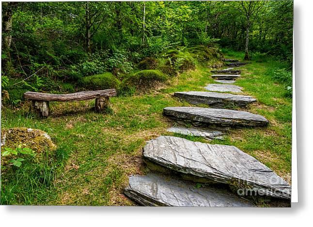 Path Into The Forest Greeting Card by Adrian Evans