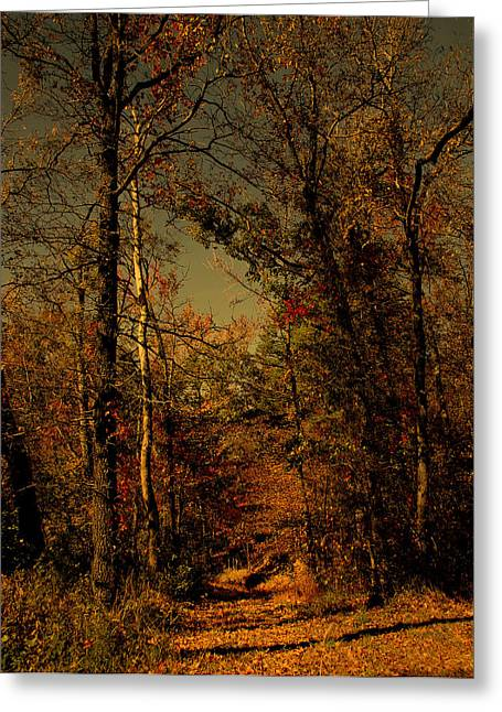 Path Into The Woods Greeting Card by Nina Fosdick