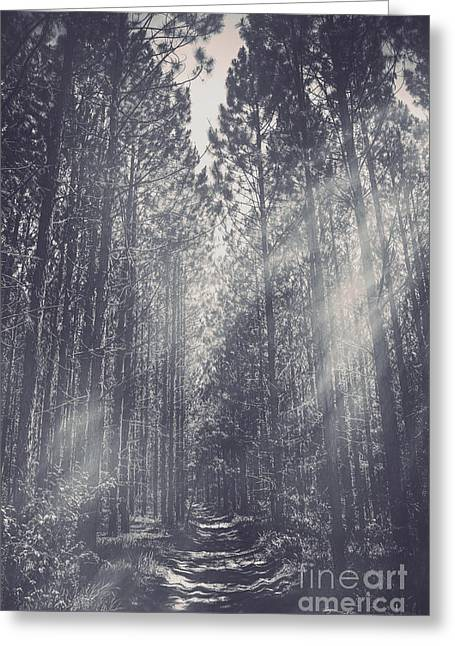 Path Leading Through Mysterious Woodlands Greeting Card