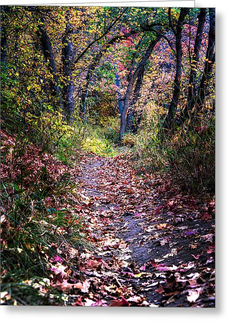 Path Of Leaves Greeting Card