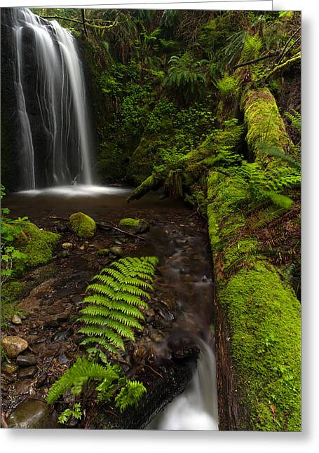 Path Of Life Greeting Card by Mike Reid