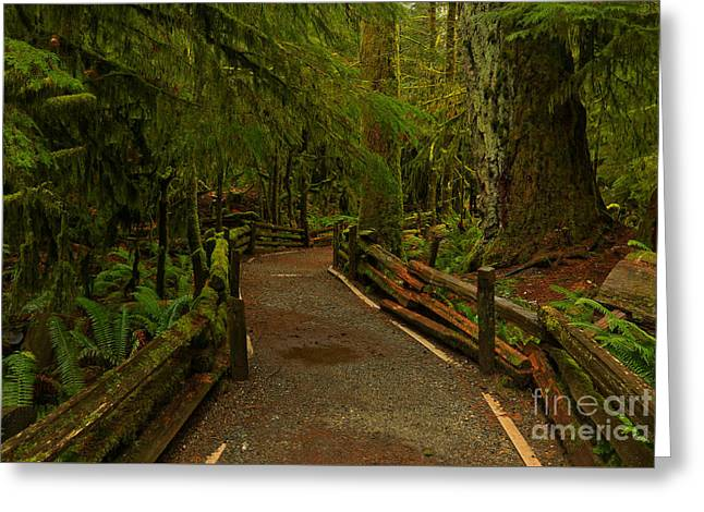 Path Of Solitude Greeting Card by Adam Jewell