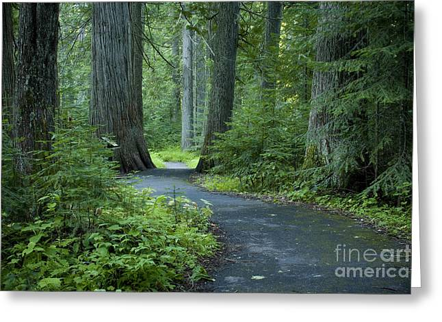 Path Through The Cedars Greeting Card by Idaho Scenic Images Linda Lantzy