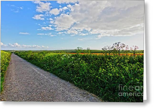 Path Through The Fields Greeting Card by Terri Waters