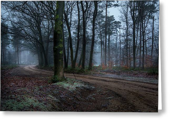 Path Through The Forrest Greeting Card
