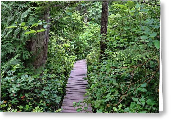 Path Through The Rainforest Greeting Card by Dan Sproul