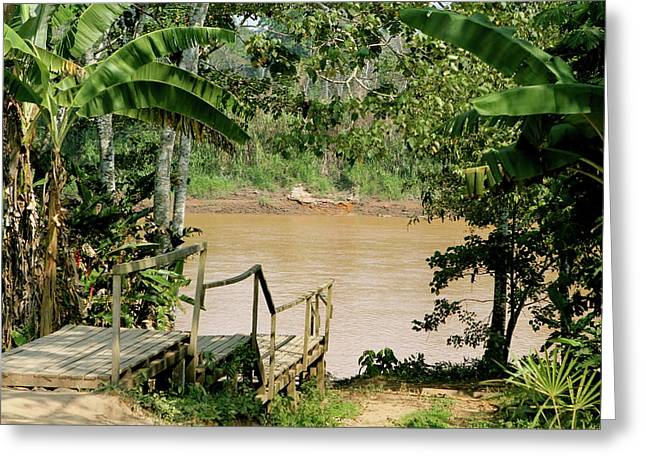 Path To The Amazon River Greeting Card
