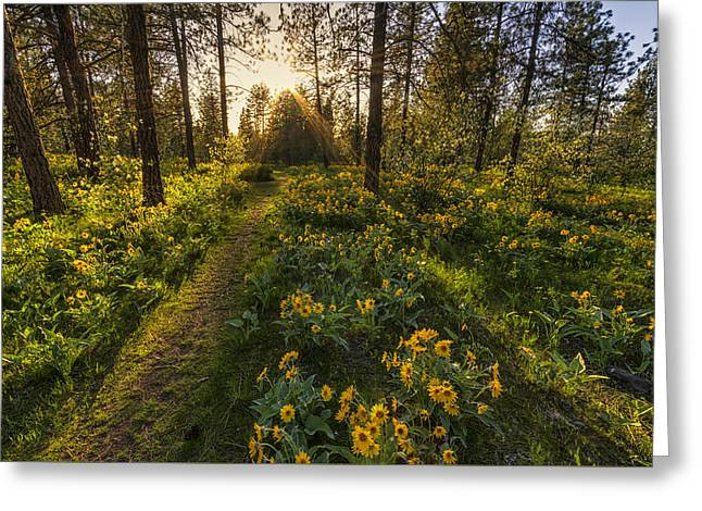 Path To The Golden Light Greeting Card by Mark Kiver