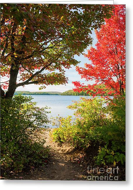 Path To The Lake Greeting Card