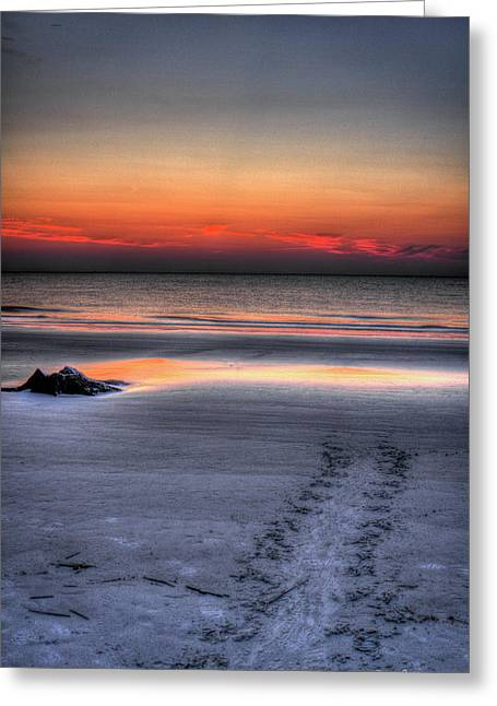 Path To The Sea Jekyll Island Sea Turtle Art Greeting Card by Reid Callaway