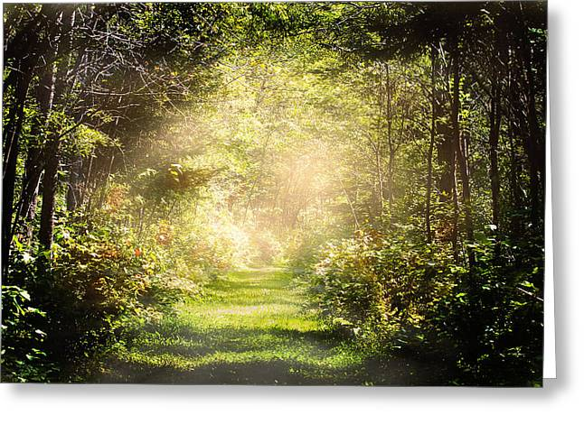 Pathway Greeting Card by Gary Smith