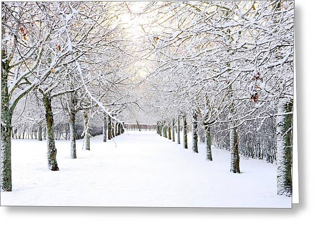 Pathway In Snow Greeting Card