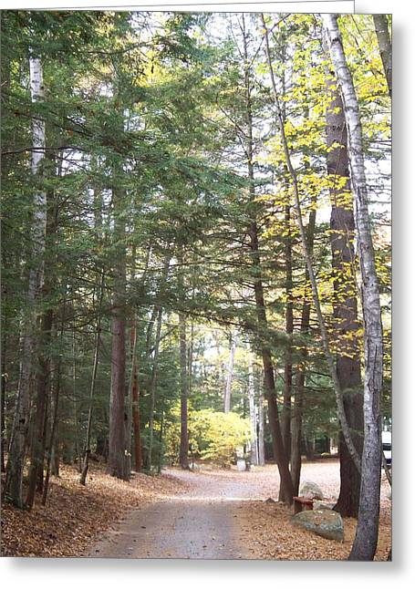 Pathway In The Woods Greeting Card by Rosanne Bartlett