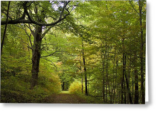 Pathway Lined By Trees Greeting Card
