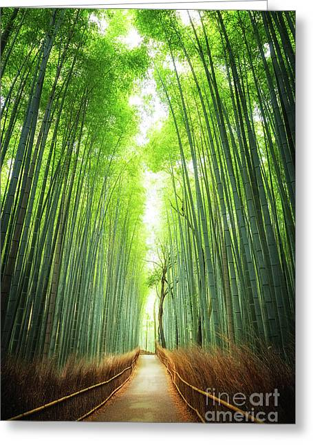 Pathway Through The Bamboo Grove Kyoto Greeting Card by Jane Rix