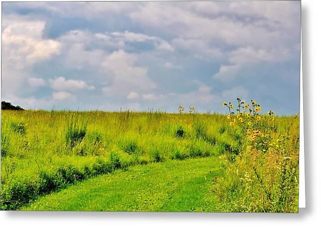 Pathway Through Wildflowers Greeting Card