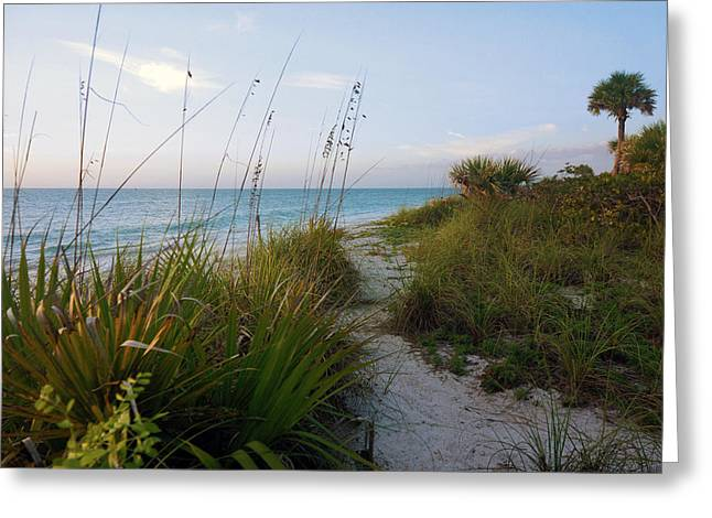 Pathway To Barefoot Beach  In Naples Greeting Card