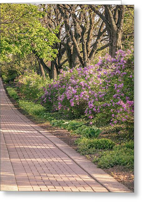 Pathway To Beauty In Lombard Greeting Card