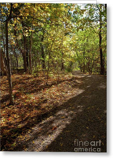 Greeting Card featuring the photograph Pathways In Fall by Iris Greenwell