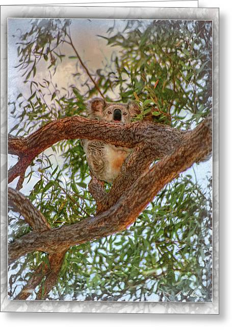 Greeting Card featuring the photograph Patience Brings Koalas by Hanny Heim