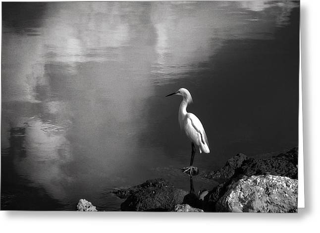 Patience In Black And White Greeting Card by Chrystal Mimbs