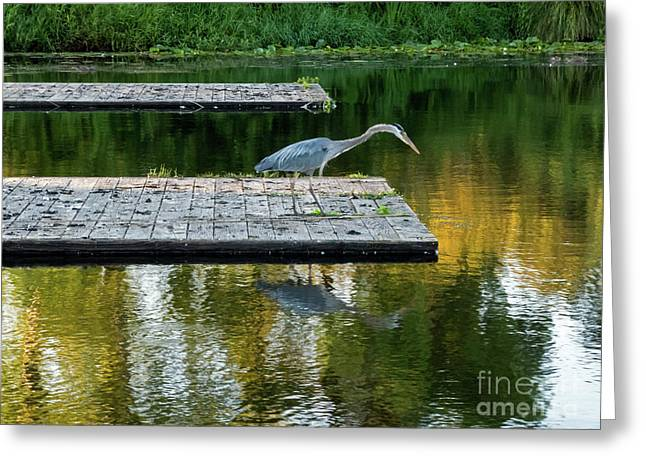 Patience Of A Heron Greeting Card