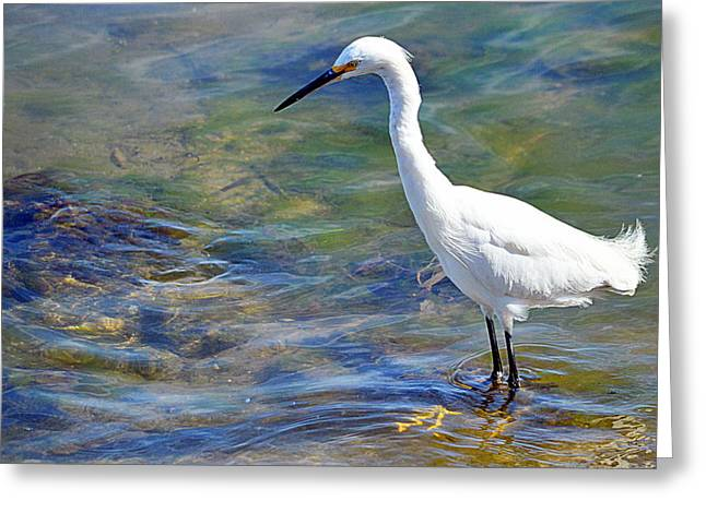 Patient Egret Greeting Card