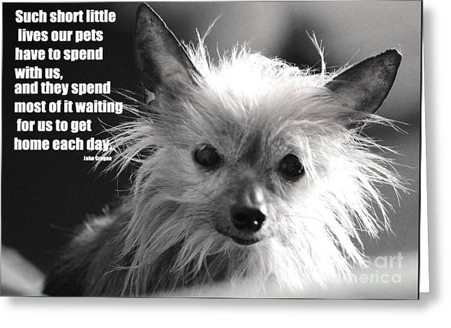 Patiently She Waits Greeting Card