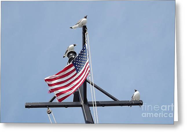 Patriot Birds Greeting Card by Dawn Gilbert Rikard