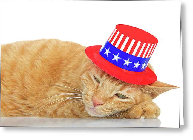 Patriotic Cat Napping Greeting Card by Sheila Fitzgerald
