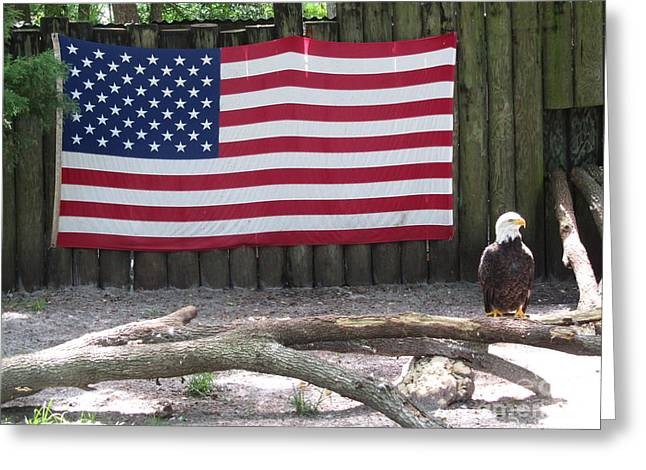 Patriotic Eagle Greeting Card by Sharon Nelson-Bianco