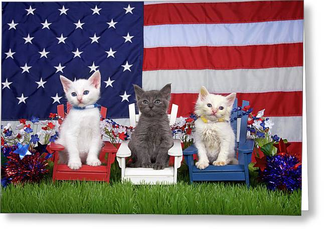 Kittens, Stars And Stripes Fur-ever Greeting Card