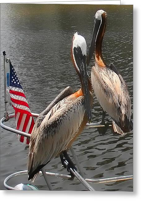 Patriotic Pelicans II Greeting Card