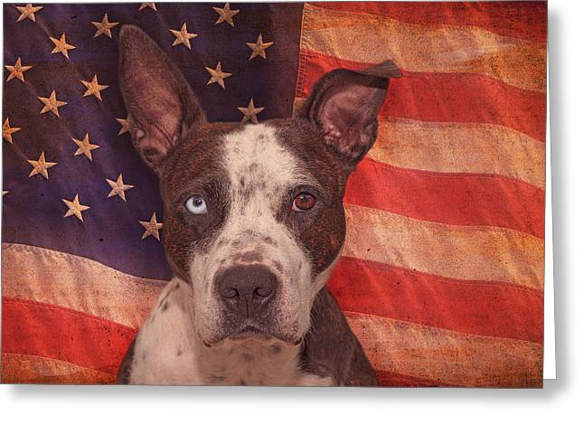Patriotic Pit Bull  Greeting Card