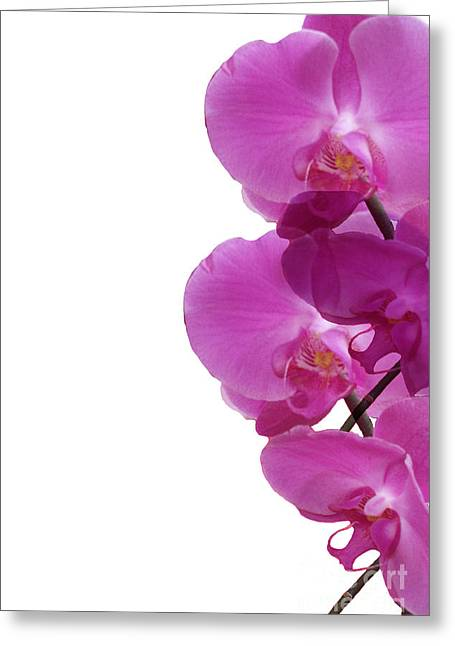 Pattern Of Orchids Greeting Card