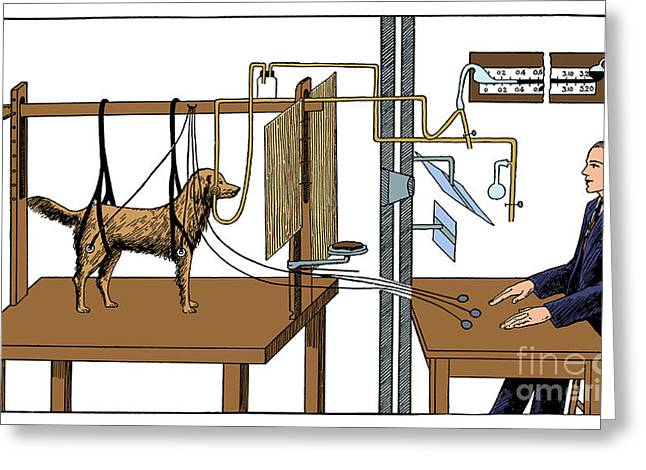 Pavlovian Experiment On Dog Greeting Card by Science Source