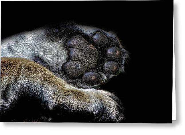 Paw Prints Greeting Card by Martin Newman